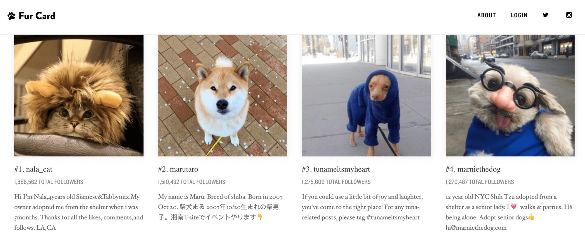 fur card animal influencers image